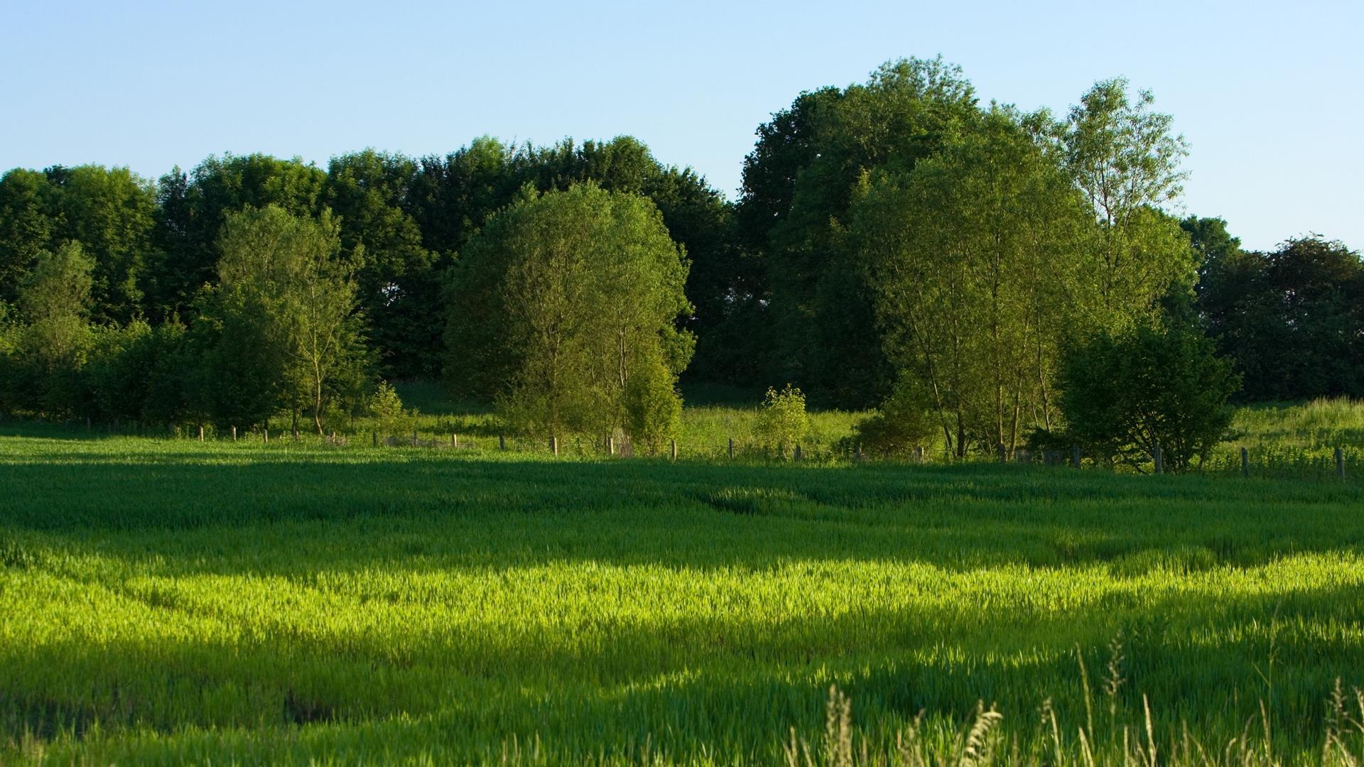 Image Et Fonds Ecran Widescreen Arbres Telechargement Gratuit 1 Le Gite Du Lac De Monampteuil